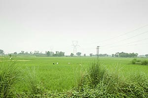 Absence ; Agriculture ; Color Image ; Copyspace ;