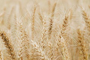 Absence ; Agriculture ; Background ; Color Image ;