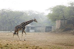 Adult Animal ; Animal Themes ; Animals ; Color Ima