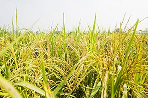 Absence ; Agriculture ; Close-Up ; Color Image ; C
