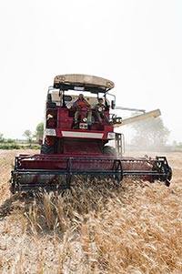 farmers Combine Machine harvesting wheat in fields