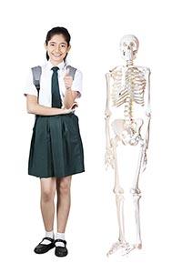 1 Person Only ; Backpack ; Bag ; Biology ; Bone ;